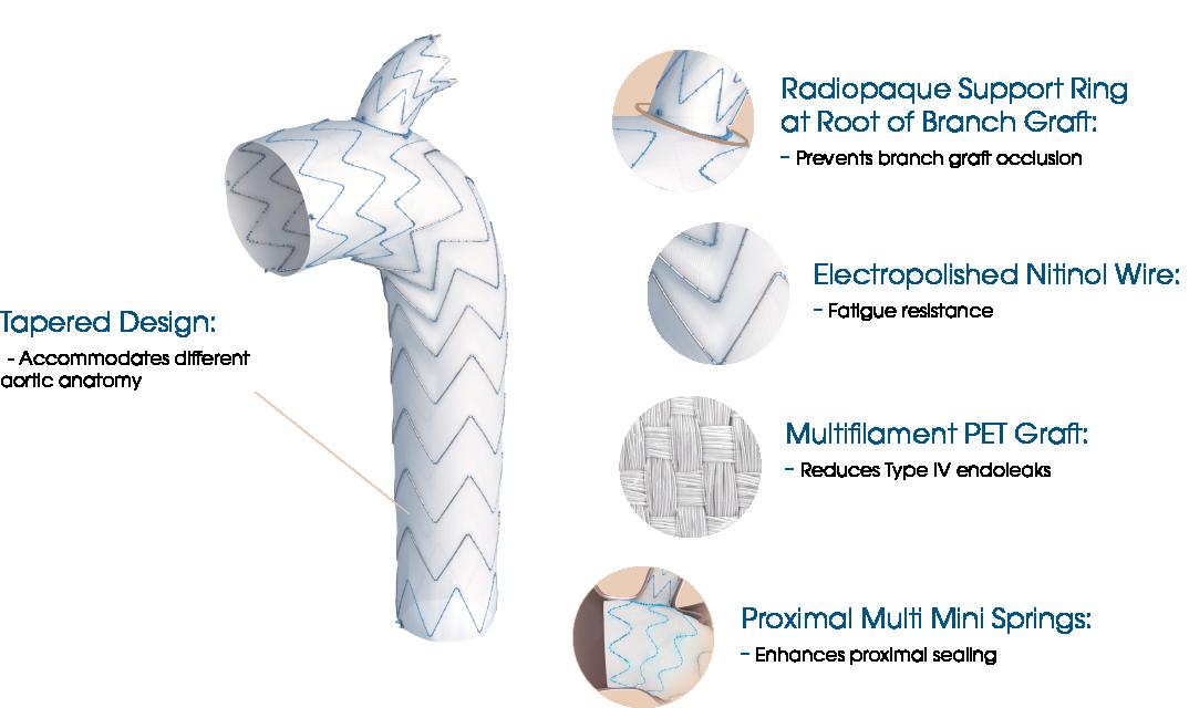 Castor - TEVAR Proximal multi mini springs